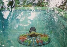 chloeswimpoolweb